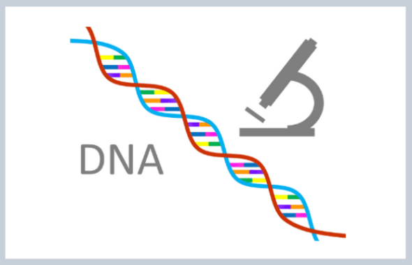 DNA鑑定による岐阜探偵の浮気調査