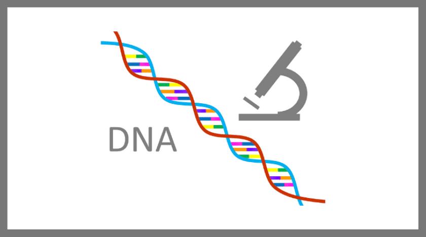 DNA鑑定による浮気調査とは?